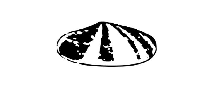 shell first logo