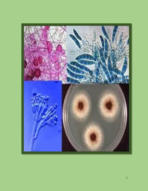 hongos humanos