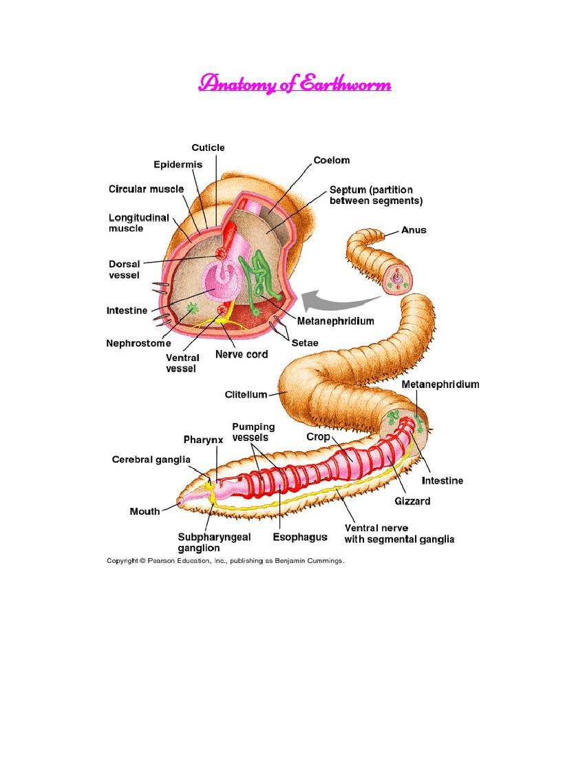 Earthworm Flpisnack