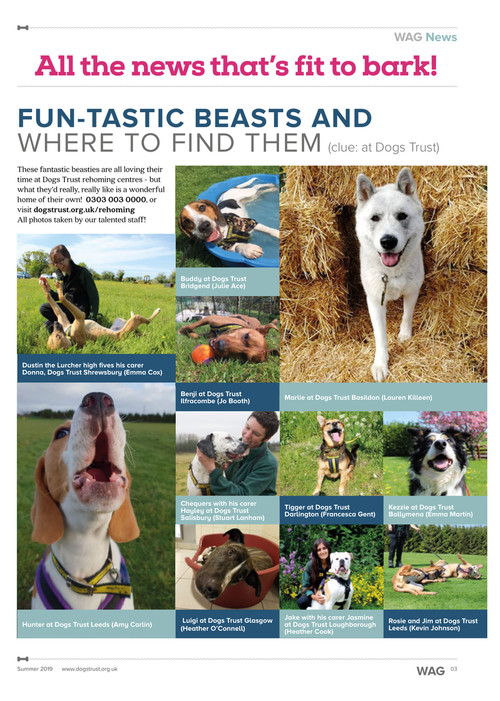 Latest issue of Wag Magazine is out now    | Dogs Trust