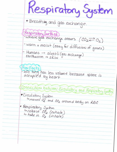 Human Body Respiratory System Notes And Worksheets By Carolyn