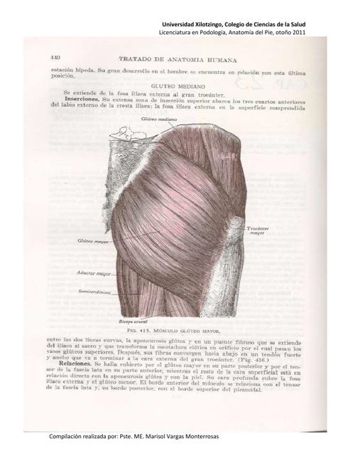 Anatomía, Miología del Miembro Inferior by Marisol Monterrosas ...