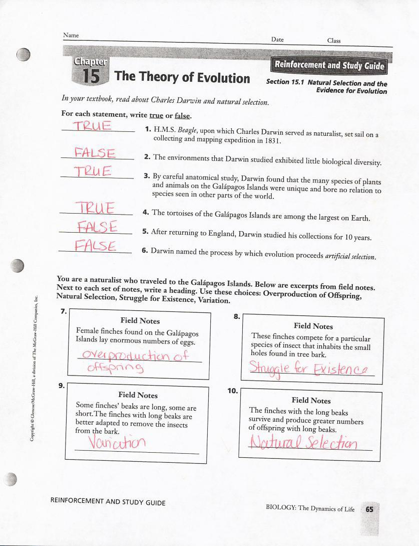 The Theory Of Evolution chapter 15 worksheet With answers