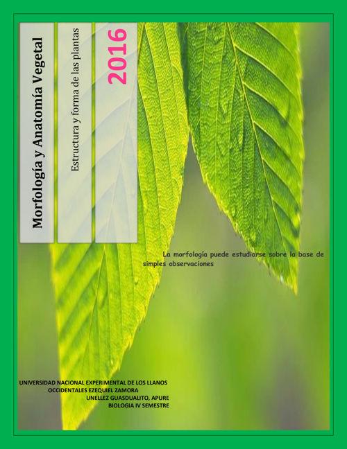 Anaomia Y Morfologia Vegetal By Edistyles Flipsnack
