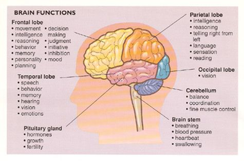 The brain function of brain ccuart Choice Image