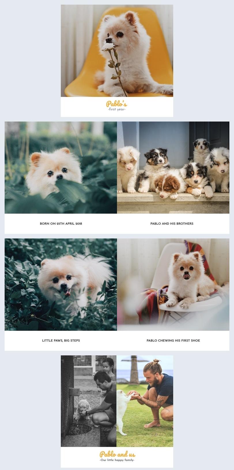 Pet Photo Album