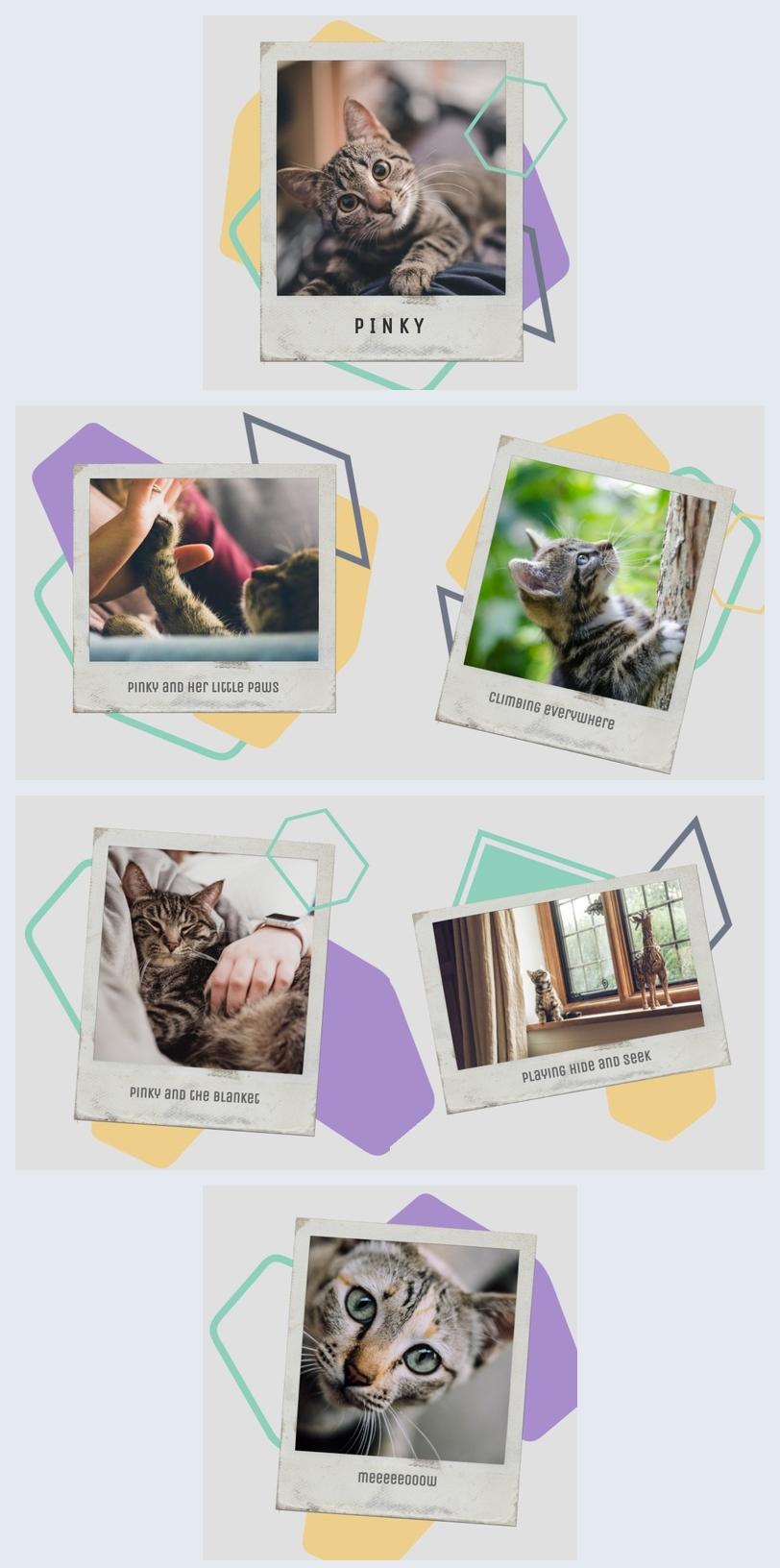 Katze Fotoalbum
