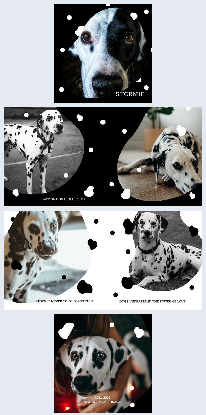 mod u00e8le de livre de photos pour animaux de compagnie