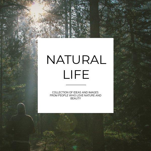 Beautiful Life Brochure